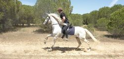 Horse riding in the Algarve